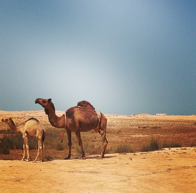 Qatar – North Of theDesert